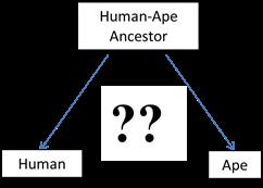Human Ape Ancestors